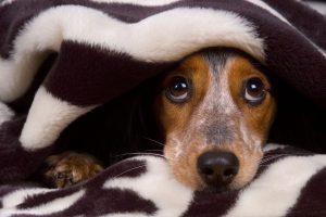 Prepariamo il cane al capodanno (seconda parte): Come comportarci durante la notte del 31 dicembre
