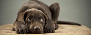 Prepariamo il cane al capodanno (prima parte): La desensibilizzazione