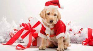 E' giusto regalare un cucciolo a Natale?