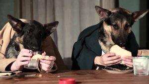 Alimentazione del cane adulto: Meglio umido, semi-umido o secco?