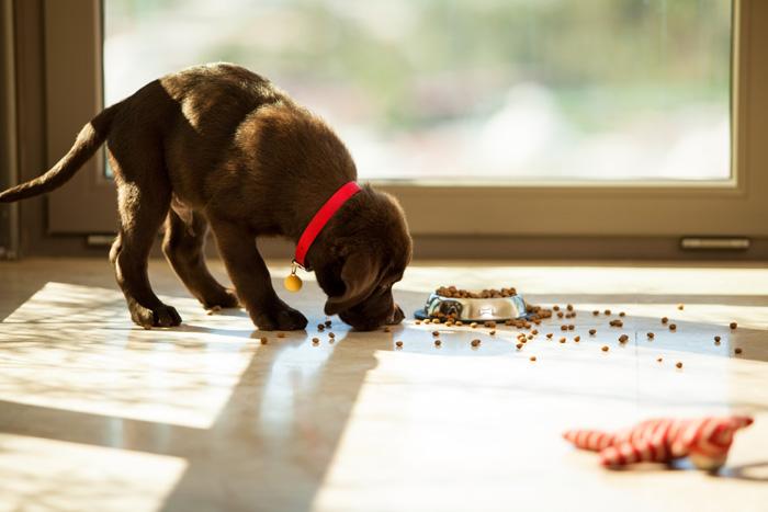 Alimentazione del cane: Il cucciolo