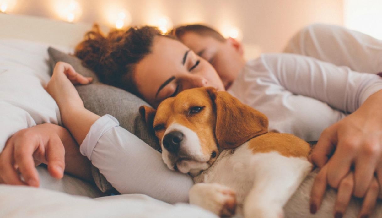 Dormire con il proprio cane: Quali benefici può trarne il nostro sonno?