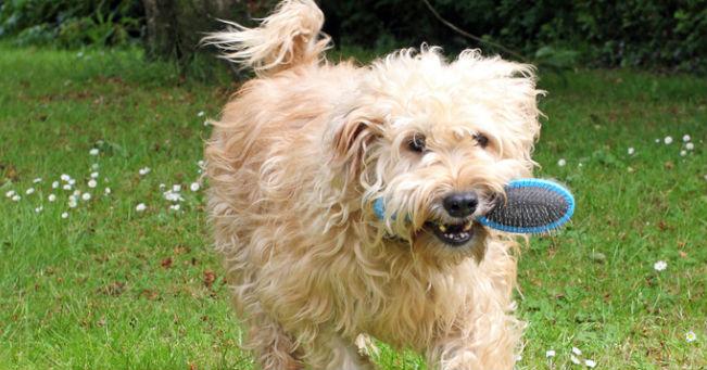 Impariamo a spazzolare il cane: Ecco gli strumenti migliori