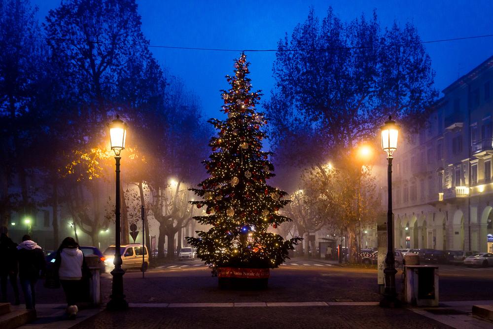 La vera star del Natale: L'abete vivo