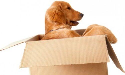 traslocare con cani e gatti